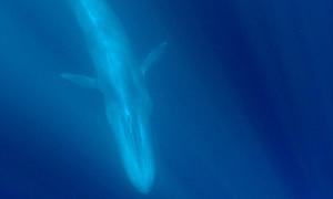 Big_blue300